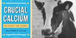 Crucial Calcium (Without the Cow!) at blog.essense-of-life.com