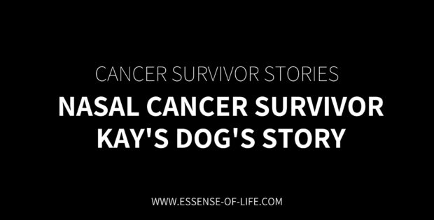 Nasal Cancer Survivor – Kay's Dog's Story