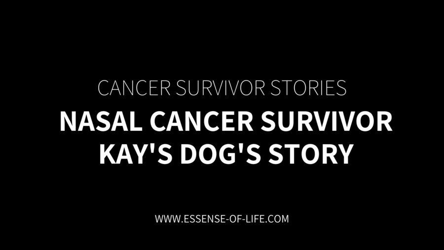 Nasal Cancer Survivor – Kay's Dog's Story