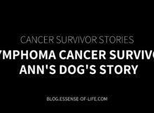 Lymphoma Cancer Survivor—Ann's Dog's Story