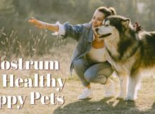 Colostrum for Healthy Pets
